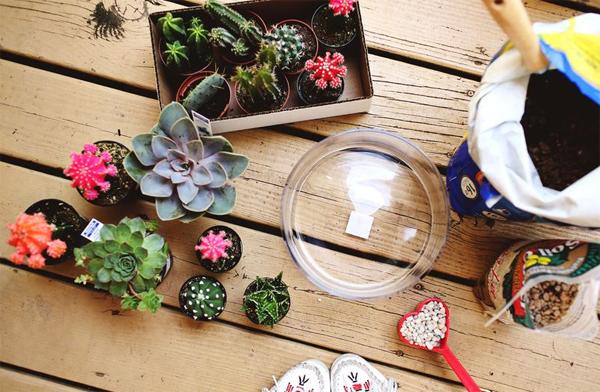 ไอเดีย DIY สวนแคคตัสในโหลแก้ว